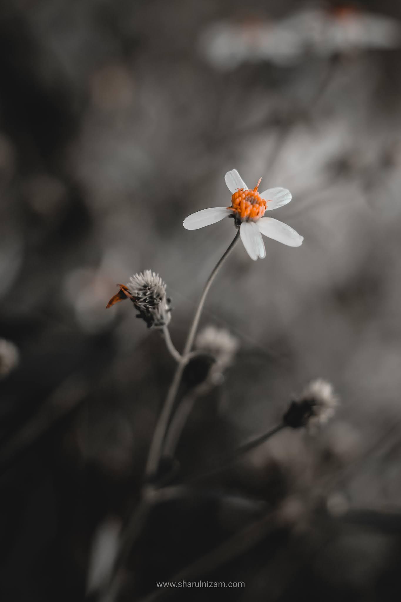 Bunga Cantik Di Tepian Jalan