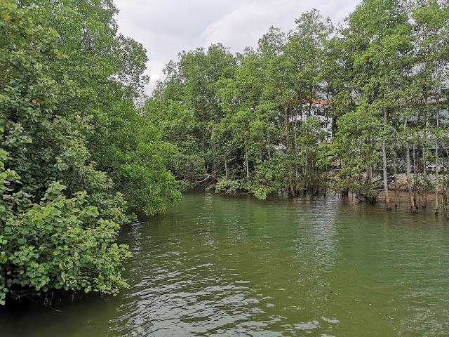 柏莱雅溪红树林