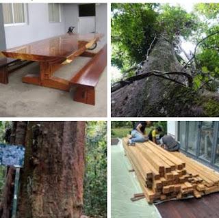 kekurangan dan kelebihan kayu Ulin untuk furniture