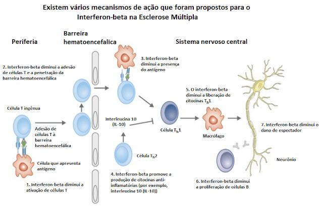 Mecanismos de ação Interferon beta esclerose múltipla