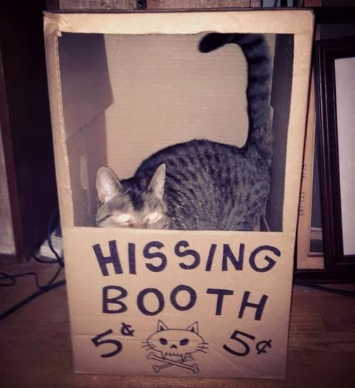 Funny Cat Hissing Booth Joke Picture