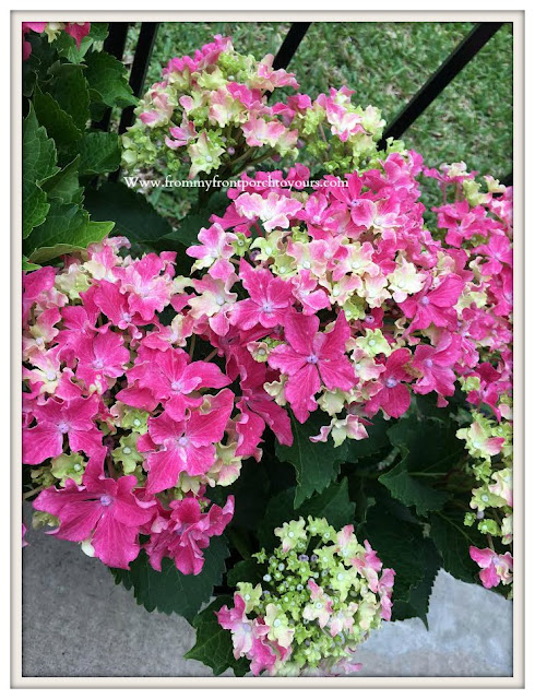 Flower -Bed-Pink-Hydrangeas-Costco- From My Front Porch To Yours