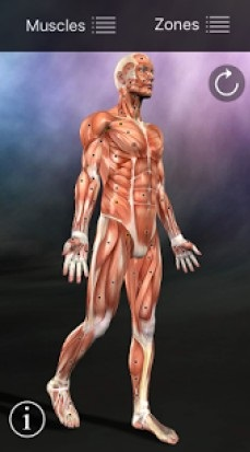 Muscle Trigger Point Anatomy 2.4.1 Apk Full latest