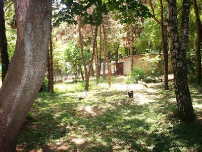 cocostârci zoo Chișinău