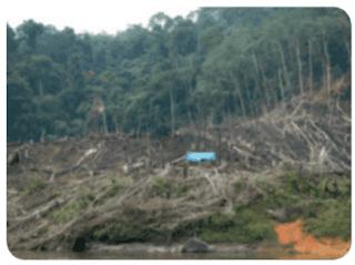 Penebangan pohon-pohon di hutan www.simplenews.me