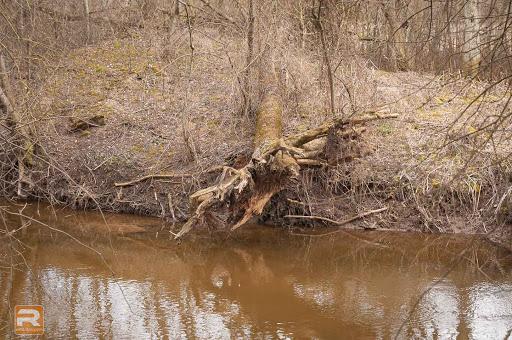 Nogāzts koks upes krastā