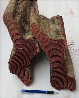 gỗ huyết rồng