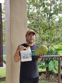 ezigrow dan durian belanda