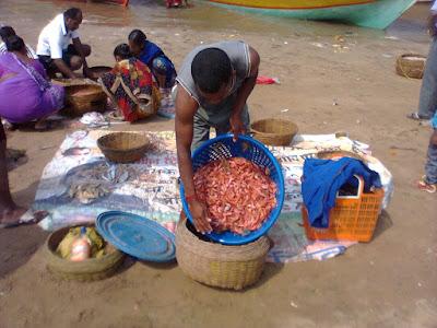 Sorting of fish at Beach