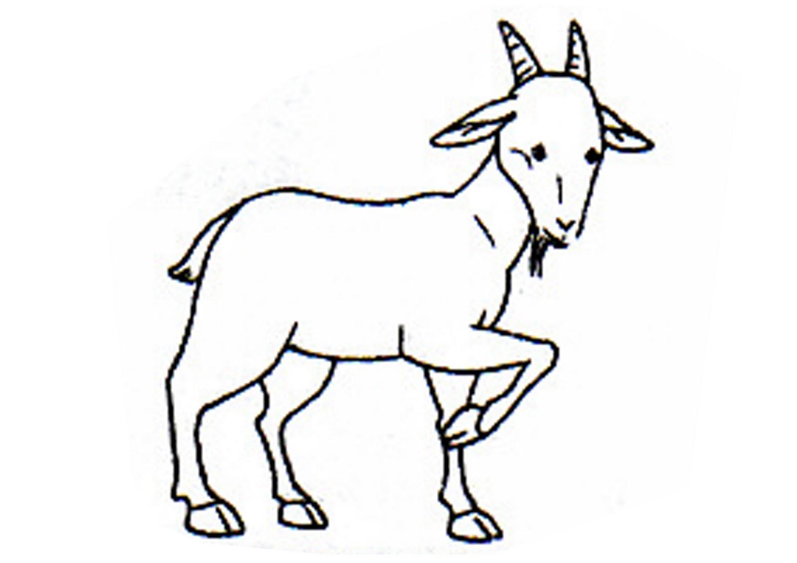 Panitia Sains AlAmin Bangi Koleksi ABM gambargambar haiwan