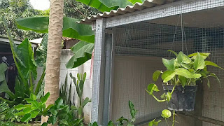 Kandang ayam baja ringan sebelah taman