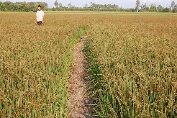 Bộ tiêu chuẩn cho nông nghiệp hữu cơ