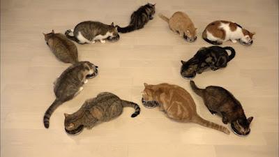10 falsos mitos sobre los gatos que debes dejar de creer
