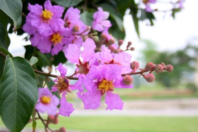 các loài hoa màu tím