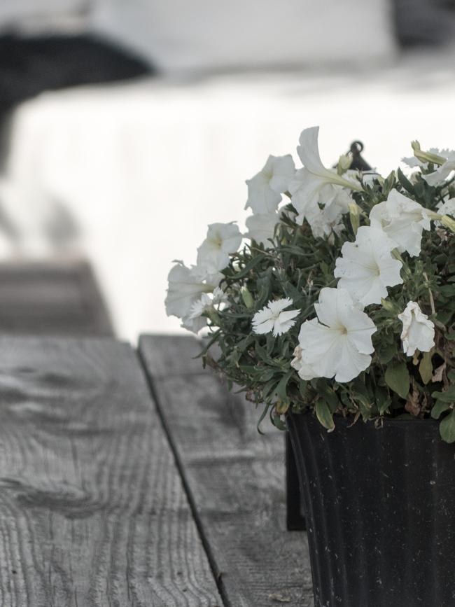 kukkia, kesä, vanhoista laudoista tehty pöytä, harmaantuneet laudat