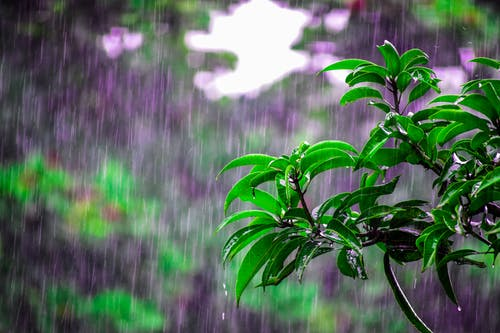 happy rainy morning