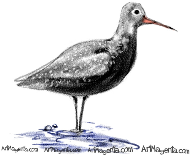 Spotted Redshank sketch painting. Bird art drawing by illustrator Artmagenta