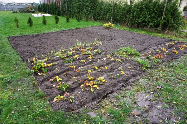 przekopany ogródek, jesienne prace w ogrodzie, przygotowanie do zimy