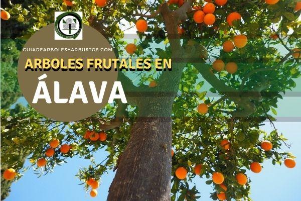 Arboles Frutales en Álava, España