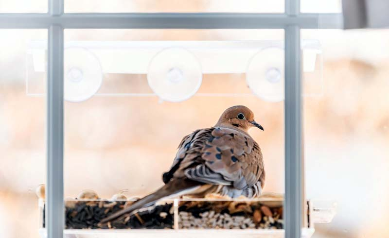 Why Do Birds Fly Into Windows, and Is There Anything You Can Do to Prevent It?