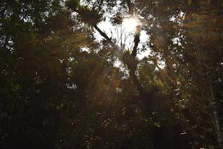 Sun rays through trees in Sundarban