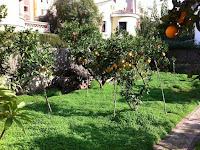 chalet en venta calle cronista revest castellon jardin1
