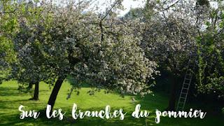 Logo Sur les branches du pommier