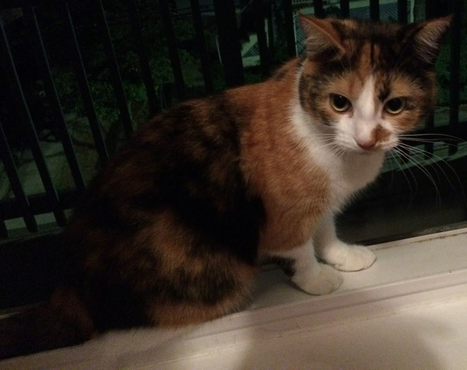 science types the genetics of the calico cat