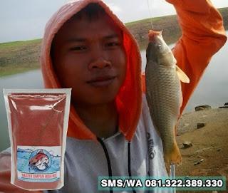 Umpan Ikan Mas Tombro Khusus Di Sungai