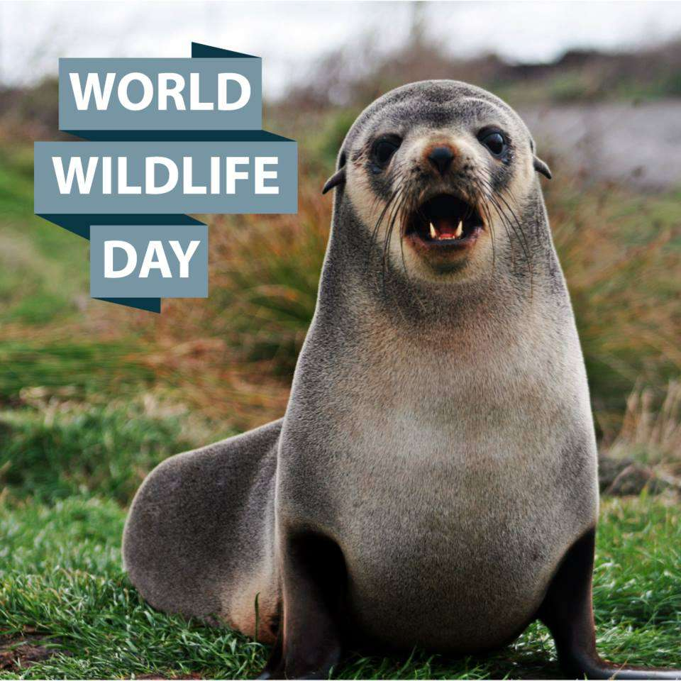World Wildlife Day Wishes For Facebook