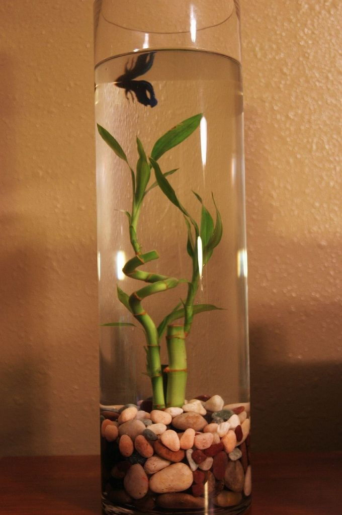 The Rise of Betta Fish Plants Petco Image