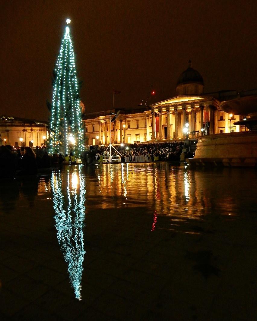 Trafalgar Square Christmas Tree Adventures of a London Kiwi