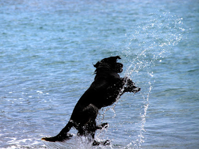 jump: energy and vitality  of a dog,photo