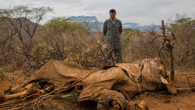 Endangered animals poaching might take us forever