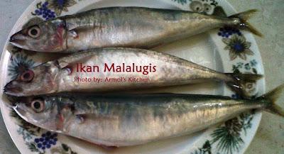Ikan Malalugis