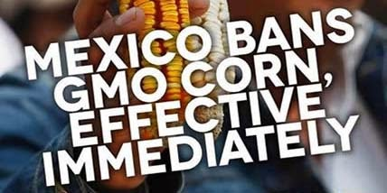 Mexico Bans GMO Corn Growth