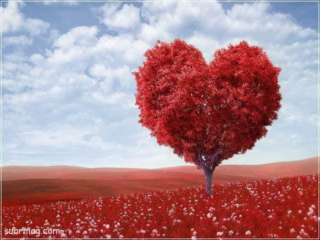 صور حب رومانسيه 13   Romantic love pictures 13