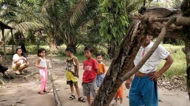 ular sawah 20171002 124955 - Heboh! Pemuda di Inhu Nekat Bergelut dengan Ular Raksasa, Kondisinya Kini Mengenaskan