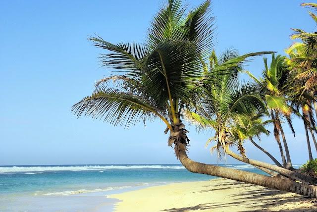Bagaimana Pohon Kelapa Bisa Tumbuh di Pantai - Bahkan di Pulau Terpencil tak Berpenghuni?