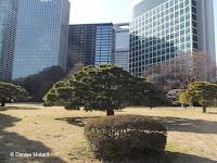 View of downtown Tokyo from inside Hama-Rikyu Garden - Japan