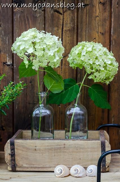 Hortensien in der Vase