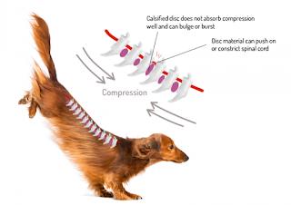 compressão de coluna dos cães em saltos