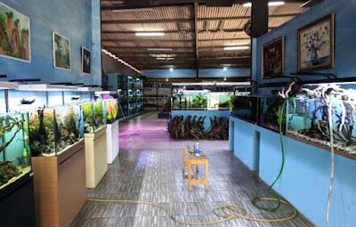jual ikan hias air laut dan air tawar Tangerang Selatan