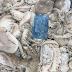 Cung cấp số lượng lớn bạch tuộc toàn quốc