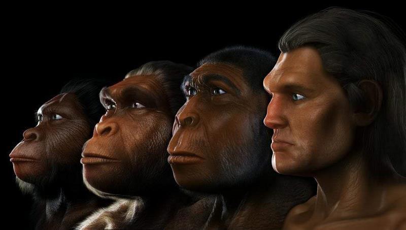 هل التطور الدارويني نظرية علمية مثبته ؟