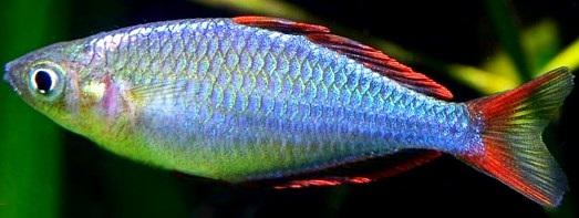 Dibujos fotos acrostico y mas fotos de peces for Curiosidades del pez espada
