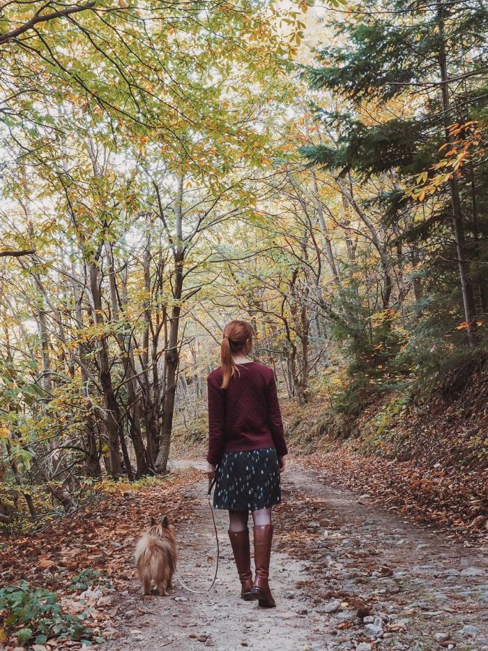 Promenade en forêt à l'automne