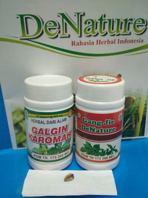 Obat kencing kerikil atau kerikil ginjal dengan tanaman herbal Obat kencing kerikil atau kerikil ginjal dengan tanaman herbal