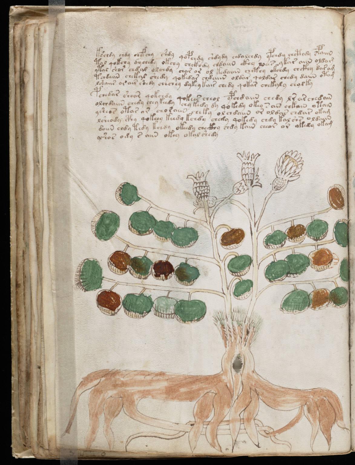 manuscrito066
