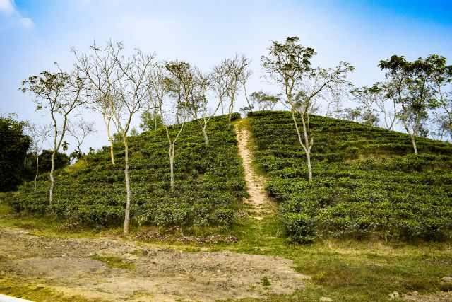 Satgaon Tea garden